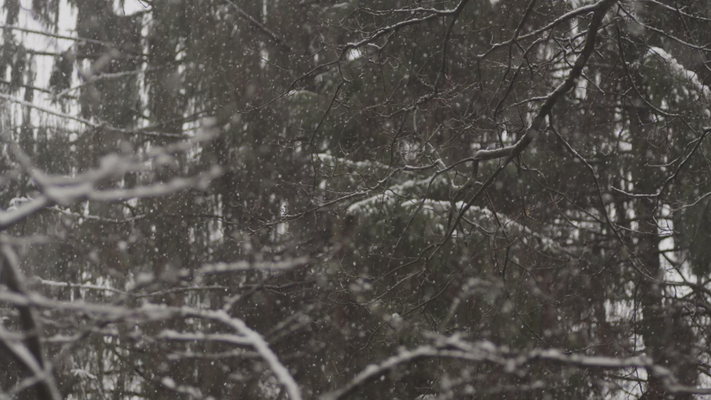 cover_winter_01